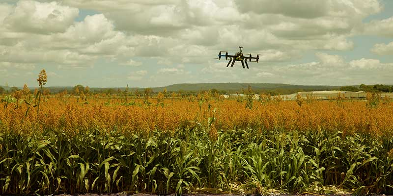 Shows Real Harvest Status - Drone Technology and Agriculture - A Happy Marriage